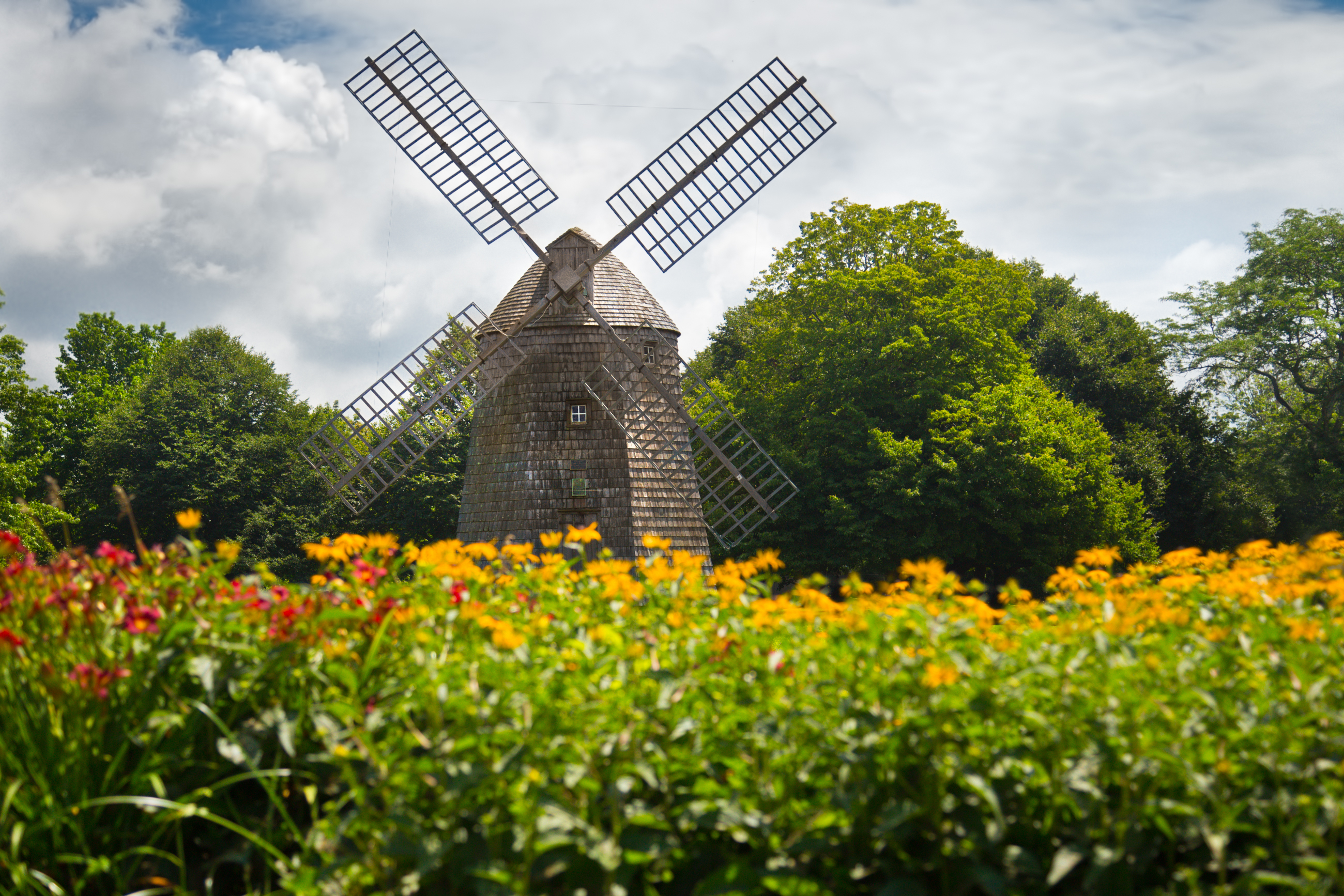 windmill in the middle of an open space with flowers and trees around